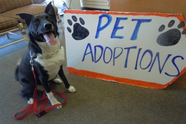Tips to Organize a Local Pet Adoption Event