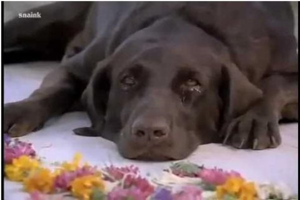 Bollywood Movies that Featured a Dog as a Star