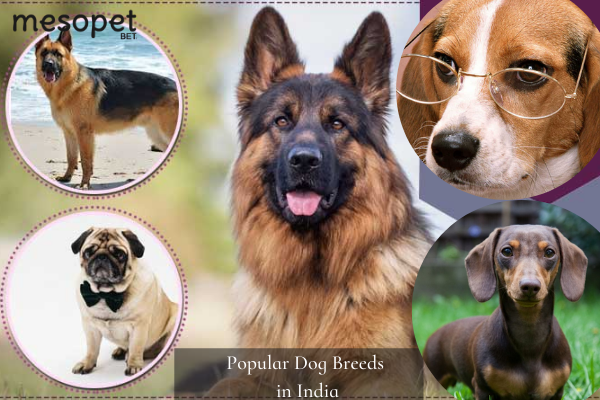 Ten Popular Dog Breeds in India: Know the Best Dog Food Options